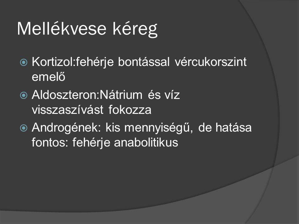Mellékvese kéreg  Kortizol:fehérje bontással vércukorszint emelő  Aldoszteron:Nátrium és víz visszaszívást fokozza  Androgének: kis mennyiségű, de hatása fontos: fehérje anabolitikus
