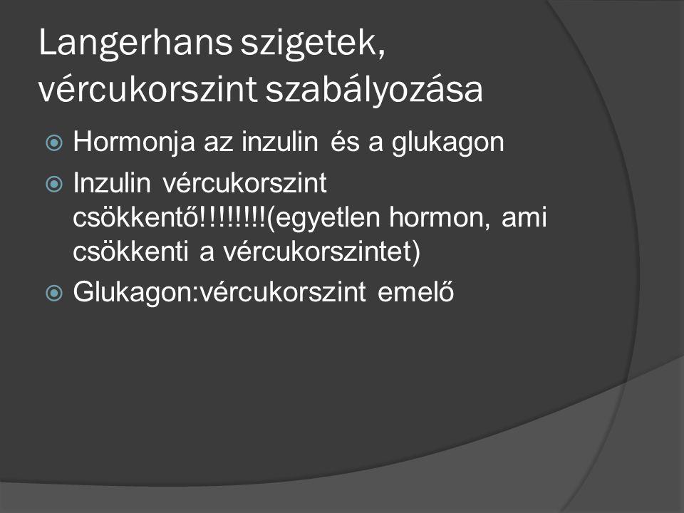 Langerhans szigetek, vércukorszint szabályozása  Hormonja az inzulin és a glukagon  Inzulin vércukorszint csökkentő!!!!!!!!(egyetlen hormon, ami csökkenti a vércukorszintet)  Glukagon:vércukorszint emelő
