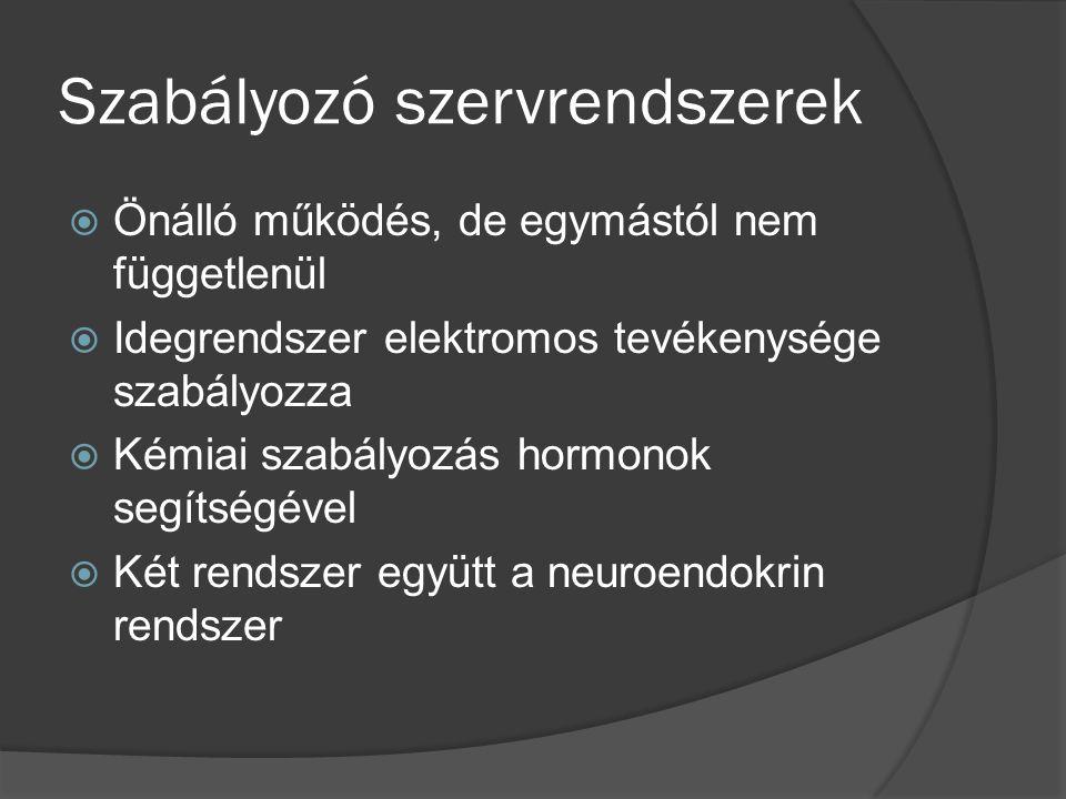 SPIROERGOGRÁFIA ÉS JELENTŐSÉGE A SPORTOLÓK KONDICIONÁLIS ÁLLAPOTÁNAK ELLENÖRZÉSÉBEN Spiroergográfia: légzésfunkciók korszerű terheléses vizsgálata.
