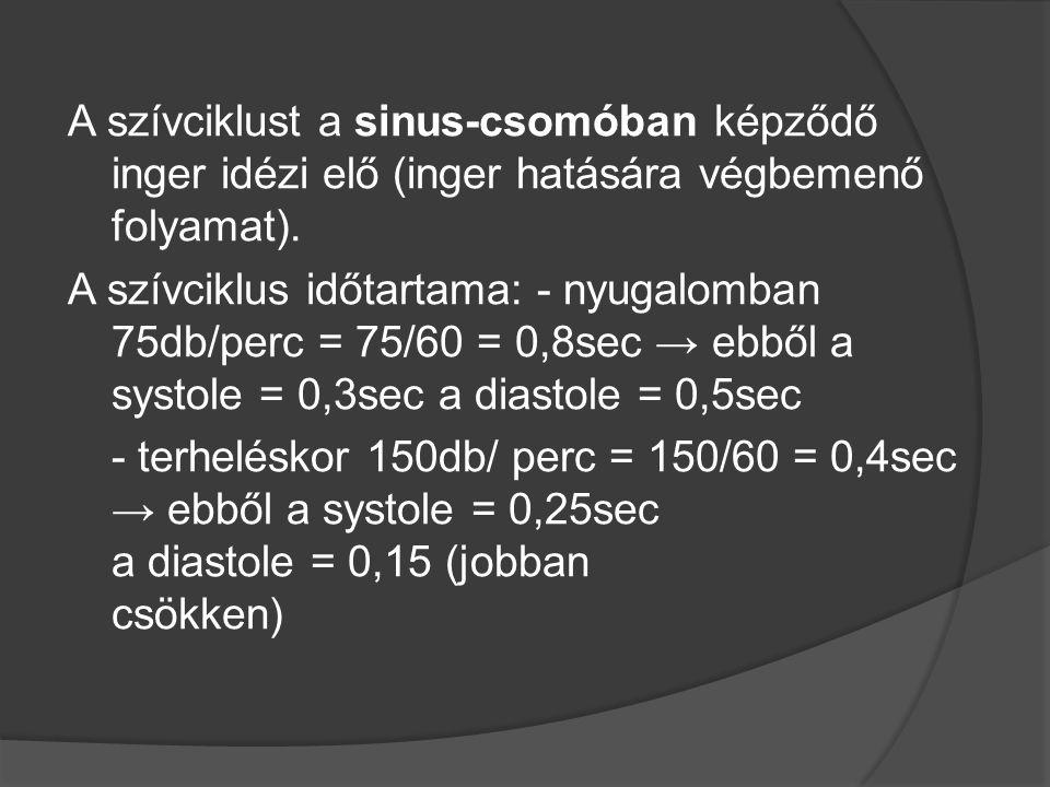 A szívciklust a sinus-csomóban képződő inger idézi elő (inger hatására végbemenő folyamat). A szívciklus időtartama: - nyugalomban 75db/perc = 75/60 =