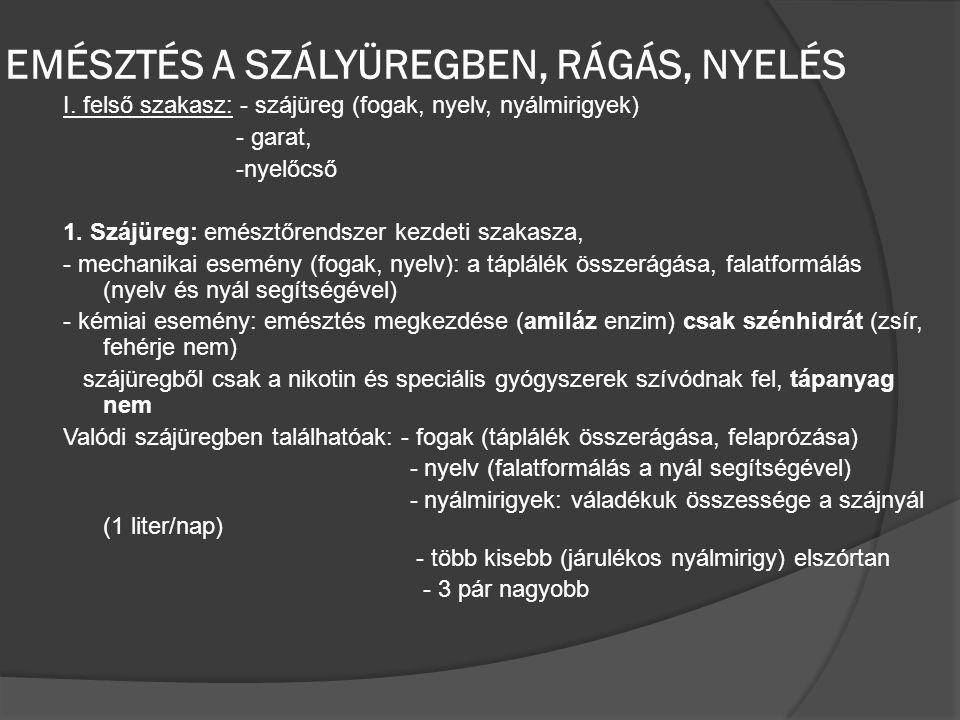 EMÉSZTÉS A SZÁLYÜREGBEN, RÁGÁS, NYELÉS I. felső szakasz: - szájüreg (fogak, nyelv, nyálmirigyek) - garat, -nyelőcső 1. Szájüreg: emésztőrendszer kezde