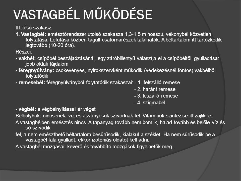 VASTAGBÉL MŰKÖDÉSE III. alsó szakasz: 1. Vastagbél: emésztőrendszer utolsó szakasza 1,3-1,5 m hosszú, vékonybél közvetlen folytatása. Lefutása közben