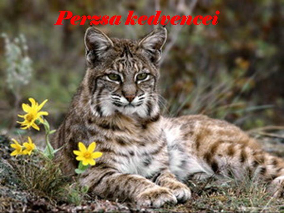 Átkozott légy perzsa
