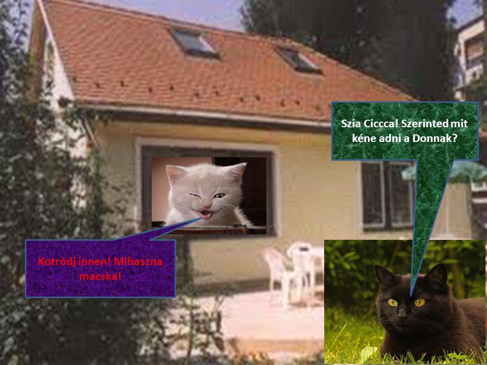 Szia Ciccca! Szerinted mit kéne adni a Donnak Kotródj innen! Mihaszna macska!