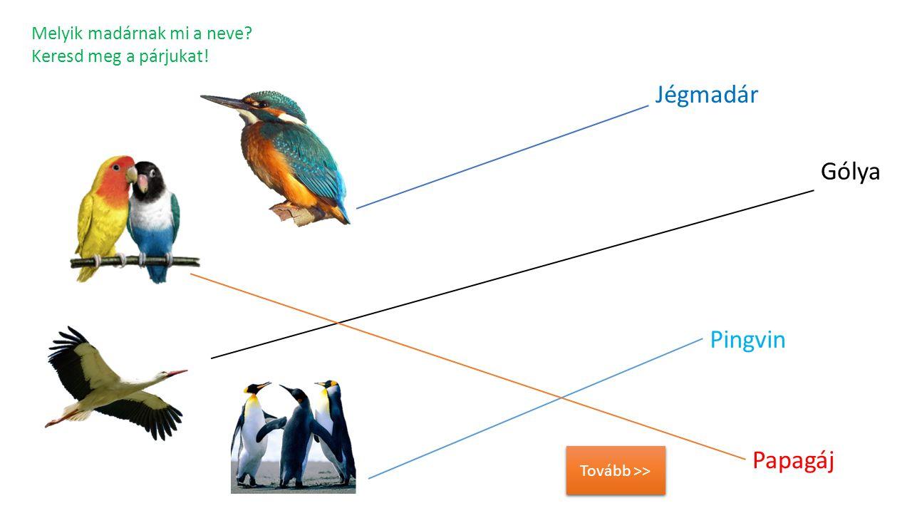 Melyik madárnak mi a neve? Keresd meg a párjukat! Papagáj Pingvin Jégmadár Gólya Tovább >>