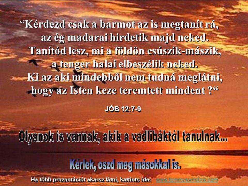 hogy az Isten okos teremtményeitől tanuljunk. Elég megállni, figyelmesen hallgatni és nézni, és az Úristen feltárja előttünk csodáit. hogy az Isten ok