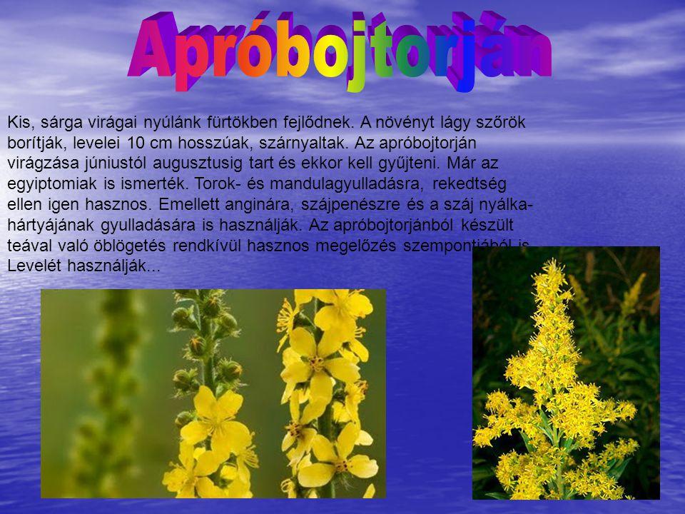 Kis, sárga virágai nyúlánk fürtökben fejlődnek. A növényt lágy szőrök borítják, levelei 10 cm hosszúak, szárnyaltak. Az apróbojtorján virágzása június