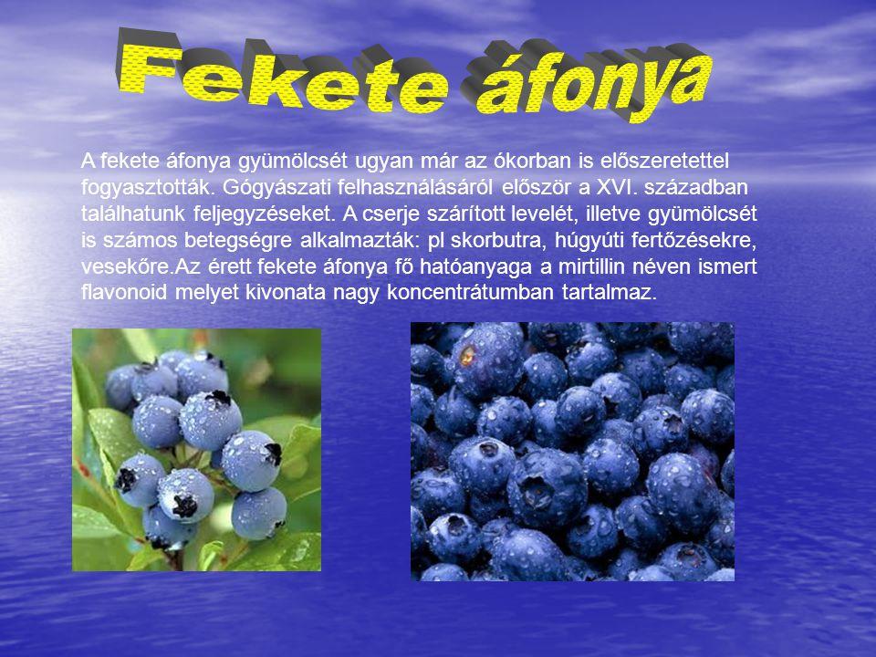 A fekete áfonya gyümölcsét ugyan már az ókorban is előszeretettel fogyasztották. Gógyászati felhasználásáról először a XVI. században találhatunk felj