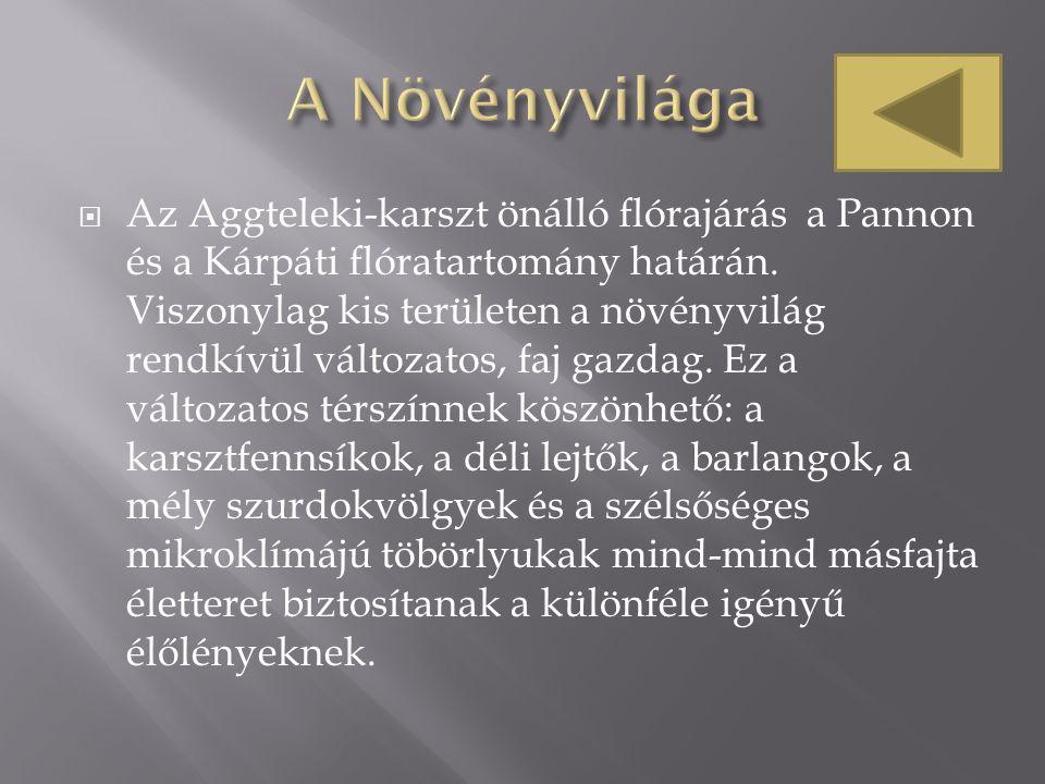  Az Aggteleki-karszt önálló flórajárás a Pannon és a Kárpáti flóratartomány határán. Viszonylag kis területen a növényvilág rendkívül változatos, faj