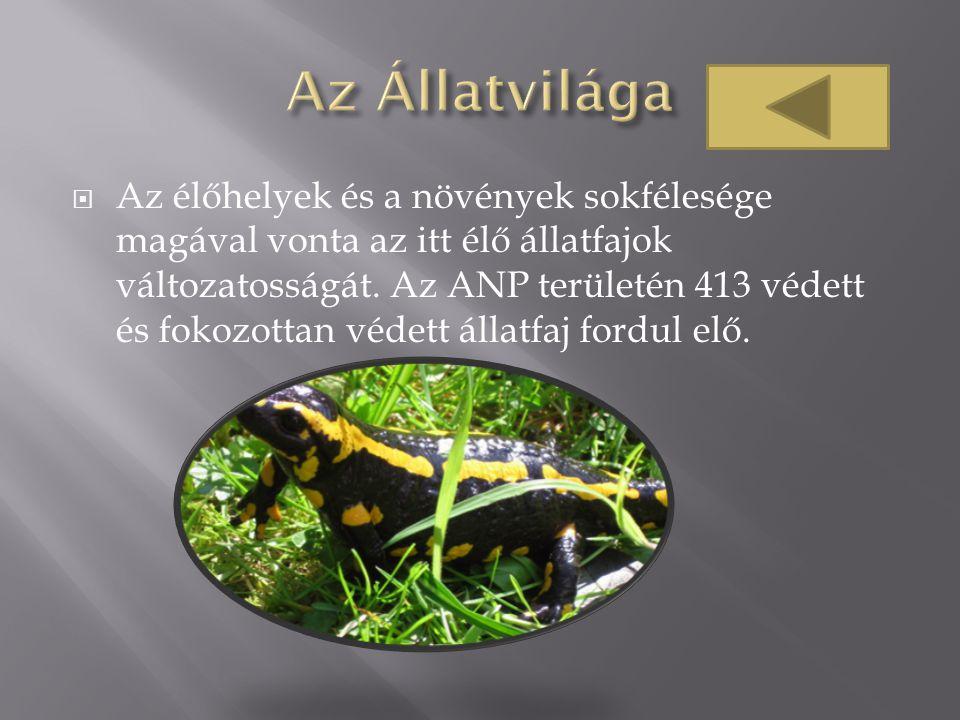  Az élőhelyek és a növények sokfélesége magával vonta az itt élő állatfajok változatosságát. Az ANP területén 413 védett és fokozottan védett állatfa