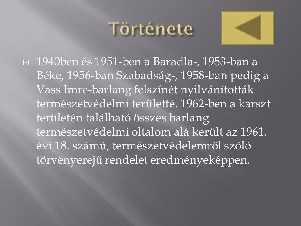  1940ben és 1951-ben a Baradla-, 1953-ban a Béke, 1956-ban Szabadság-, 1958-ban pedig a Vass Imre-barlang felszínét nyilvánították természetvédelmi t