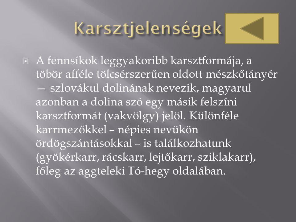  A fennsíkok leggyakoribb karsztformája, a töbör afféle tölcsérszerűen oldott mészkőtányér — szlovákul dolinának nevezik, magyarul azonban a dolina s