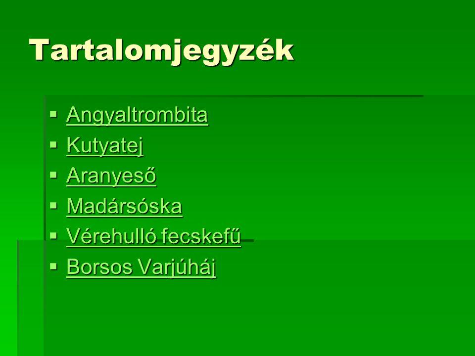 Angyaltrombita  Halálosan mérgező, Az angyaltrombita (Brugmansia) a burgonyavirágúak (Solanales) rendjébe tartozó burgonyafélék (Solanaceae) családjának egyik nemzetsége hét fajjal.