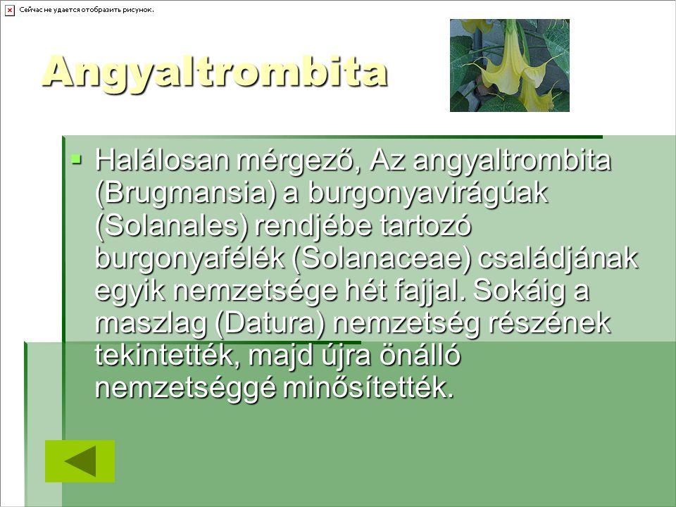 Angyaltrombita  Halálosan mérgező, Az angyaltrombita (Brugmansia) a burgonyavirágúak (Solanales) rendjébe tartozó burgonyafélék (Solanaceae) családjá