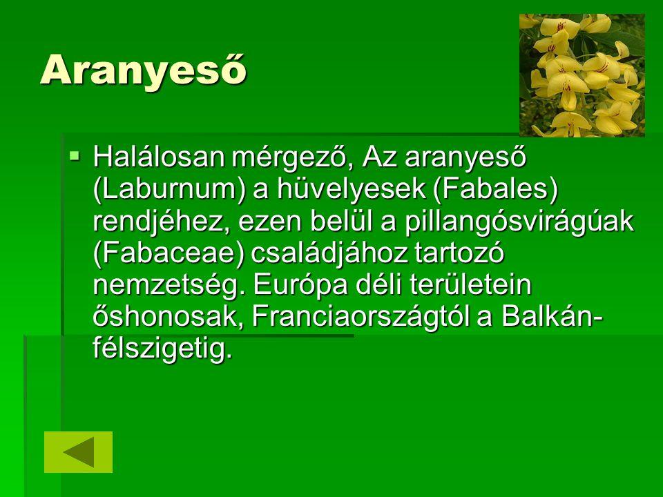 Aranyeső  Halálosan mérgező, Az aranyeső (Laburnum) a hüvelyesek (Fabales) rendjéhez, ezen belül a pillangósvirágúak (Fabaceae) családjához tartozó n