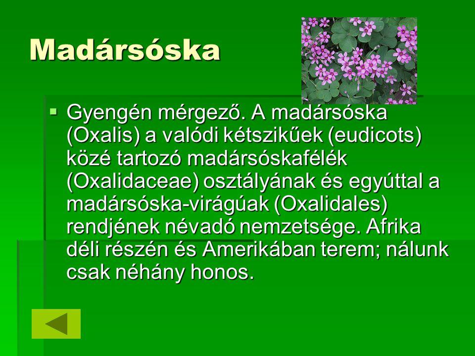 Madársóska  Gyengén mérgező. A madársóska (Oxalis) a valódi kétszikűek (eudicots) közé tartozó madársóskafélék (Oxalidaceae) osztályának és egyúttal