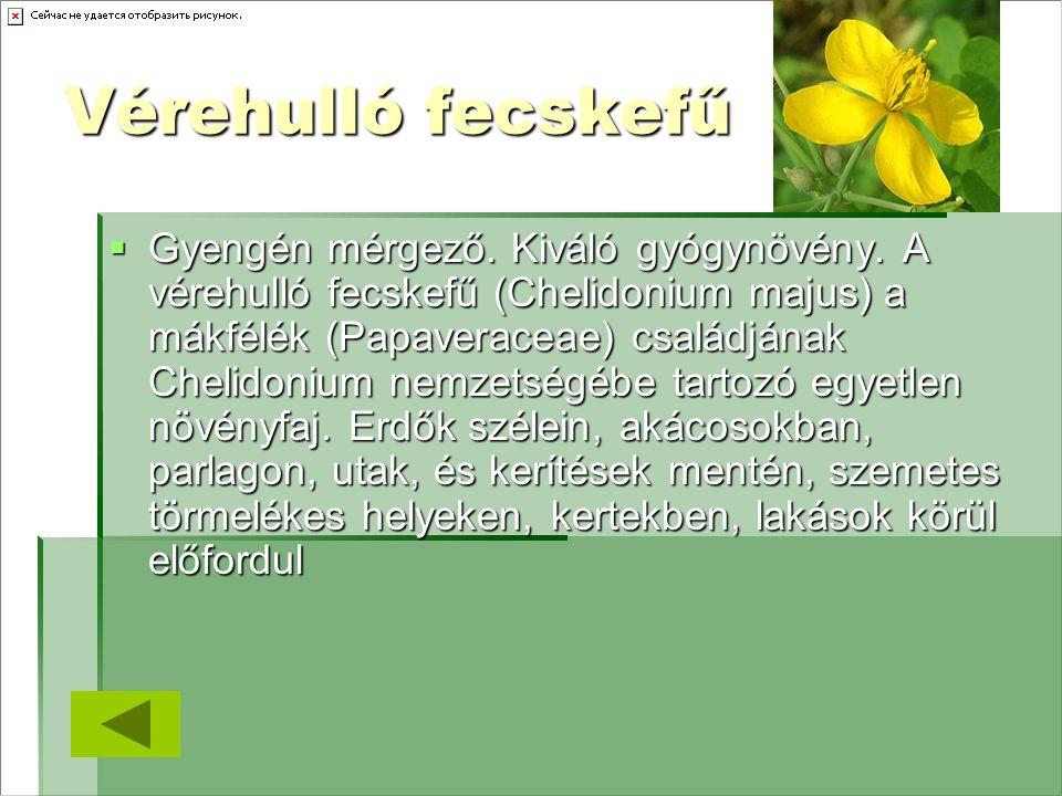 Vérehulló fecskefű  Gyengén mérgező. Kiváló gyógynövény. A vérehulló fecskefű (Chelidonium majus) a mákfélék (Papaveraceae) családjának Chelidonium n