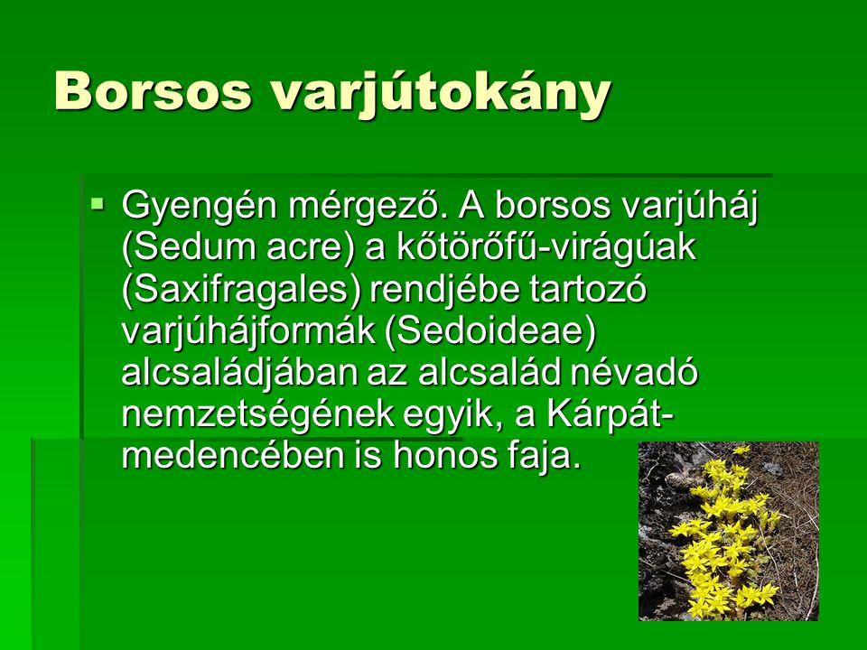 Borsos varjútokány  Gyengén mérgező. A borsos varjúháj (Sedum acre) a kőtörőfű-virágúak (Saxifragales) rendjébe tartozó varjúhájformák (Sedoideae) al
