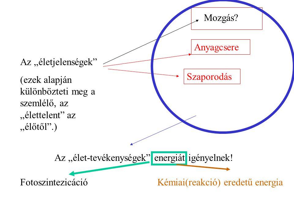 Prokarióták: (nincs valódi sejtmag) Baktériumok Kék algák Sugárgombák Jellemzőik: *Rendkívül gyors szaporodás *Nagy alkalmazkodóképesség Méretük ~ 1μm Eukarióták: (valódi, elkülönült sejtmag) Moszatok: Gombák: Protozóák : Méretük ~ 10μm Műszaki műveletekkel leválasztható.