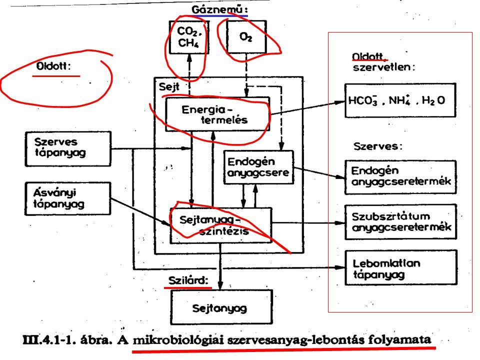 """Anyagfelvétel a sejthártyán keresztül Darabos és kolloid szerves szennyeződés Energianyerés (oxidáció) ATP=>ADP Sejtanyag szintézis (szaporodás) Testen kívül ható enzimek (exoenzimek) Hidrolizáció, """"elfolyósodás"""