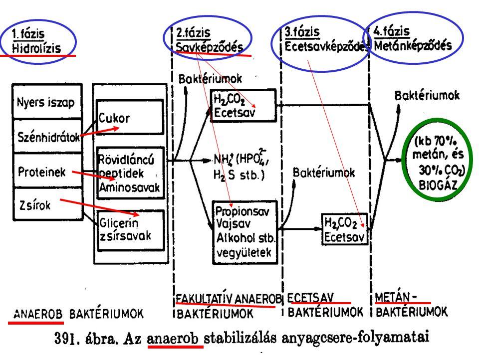 Iszapstabilizáció Szerves anyagok Heterotrof baktériumok CO 2, H 2 O Szerves anyagok Négy fázisú, különböző baktériumcsoportok tevékenysége CO 2, CH 4 Aerob ~ Anaerob ~