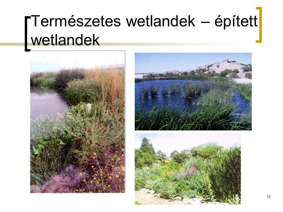 10 Természetes wetlandek – épített wetlandek