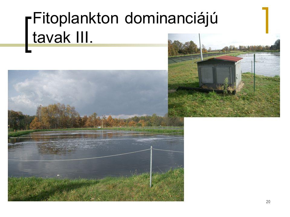 Fitoplankton dominanciájú tavak III. 20