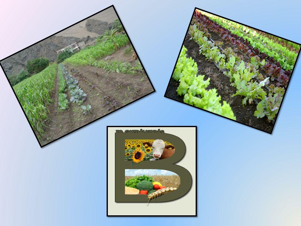Biogazdálkodás részletesen A bioélelmiszert csak a biogazdálkodás állíthatja elő.