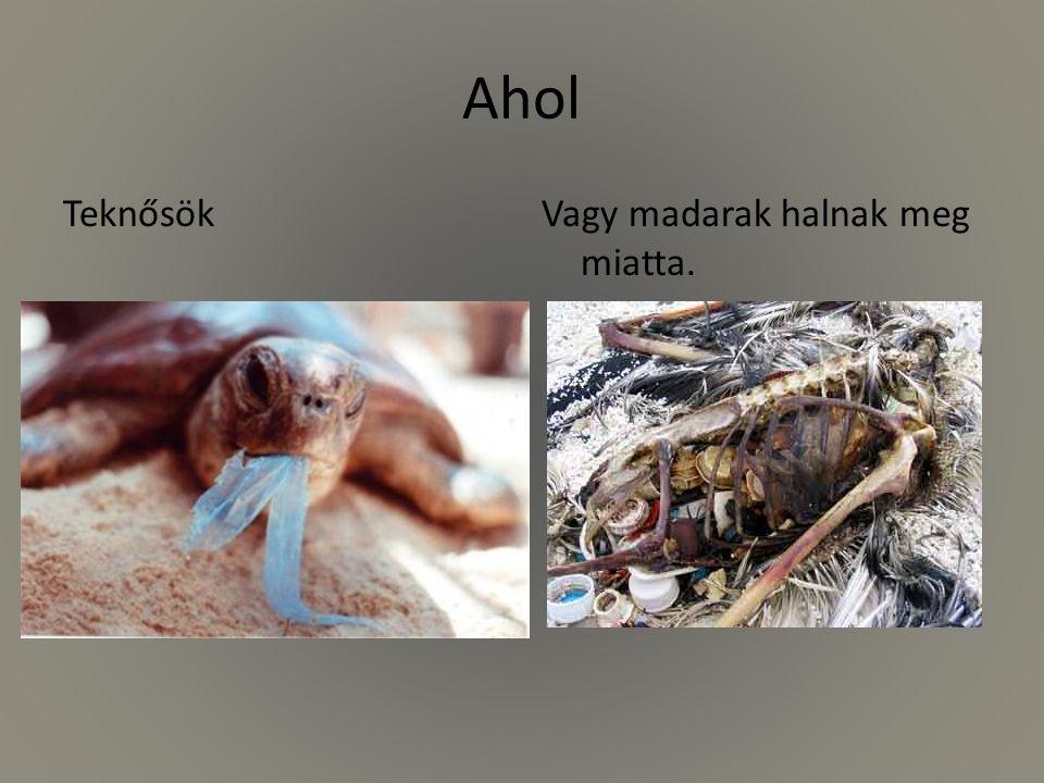 Ahol TeknősökVagy madarak halnak meg miatta.
