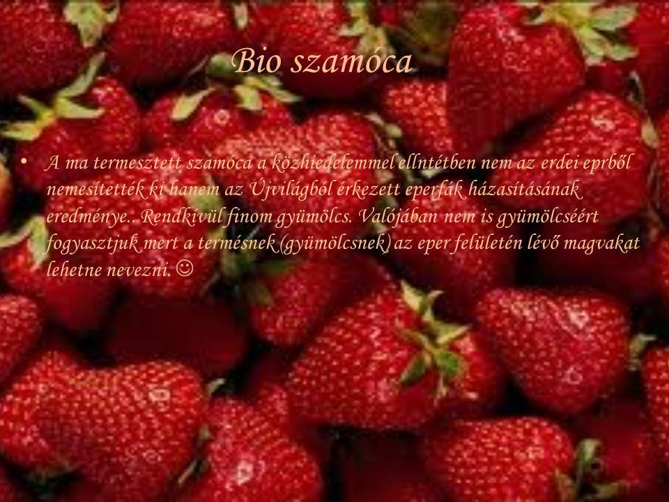 Bio szamóca A ma termesztett szamóca a közhiedelemmel ellntétben nem az erdei eprből nemesítették ki hanem az Újvilágból érkezett eperfák házasításána