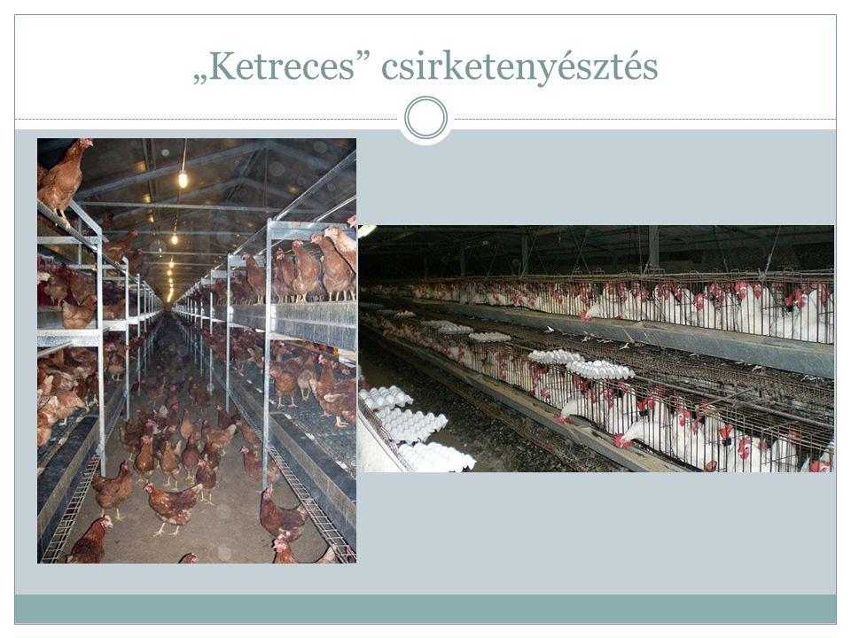 A bio csirketenyésztés