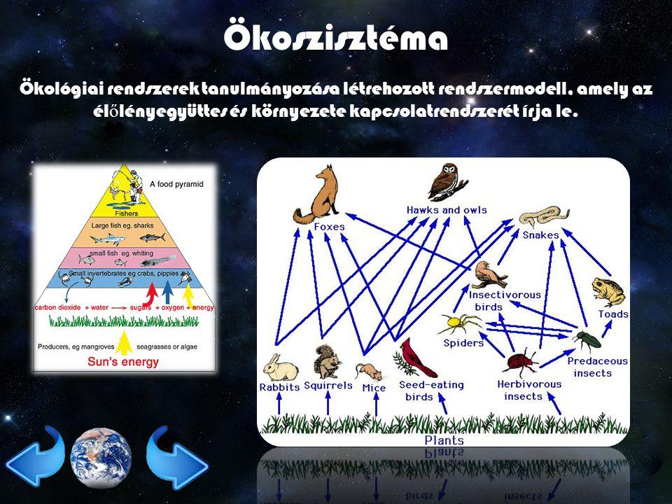 Ökoszisztéma Ökológiai rendszerek tanulmányozása létrehozott rendszermodell, amely az él ő lényegyüttes és környezete kapcsolatrendszerét írja le.