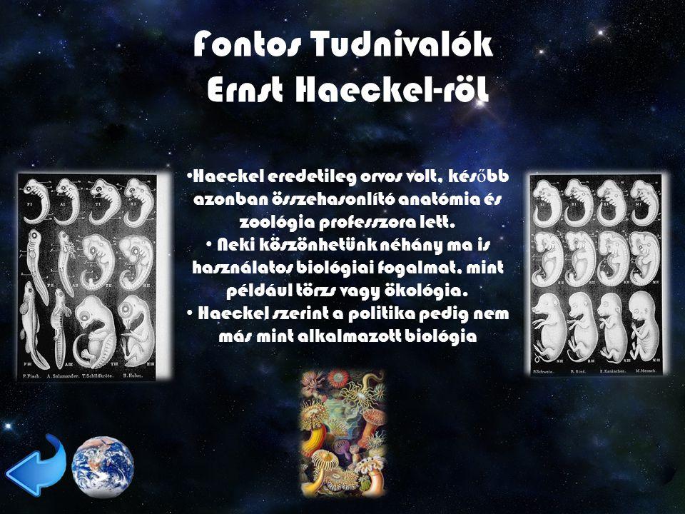 Fontos Tudnivalók Ernst Haeckel-röL Haeckel eredetileg orvos volt, kés ő bb azonban összehasonlító anatómia és zoológia professzora lett.