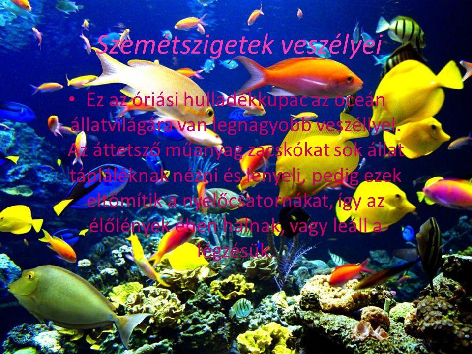 Szemétszigetek veszélyei Ez az óriási hulladékkupac az óceán állatvilágára van legnagyobb veszéllyel. Az áttetsző műanyag zacskókat sok állat táplálék