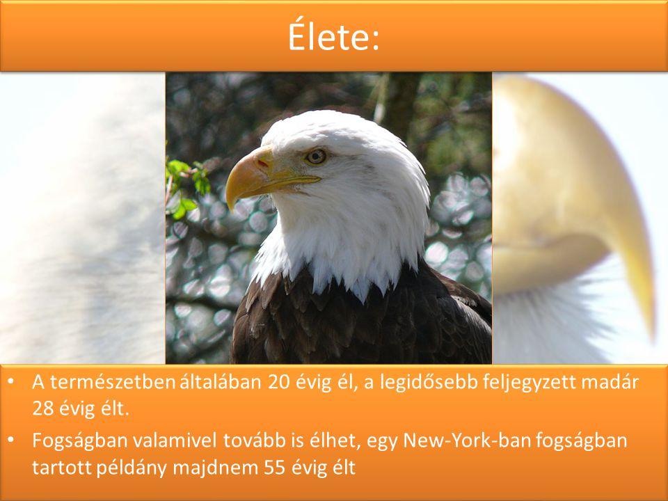 Élete: A természetben általában 20 évig él, a legidősebb feljegyzett madár 28 évig élt.