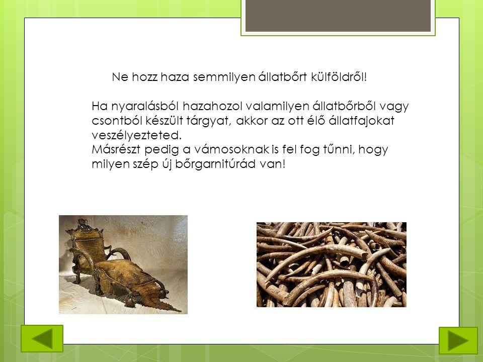 Ne hozz haza semmilyen állatbőrt külföldről! Ha nyaralásból hazahozol valamilyen állatbőrből vagy csontból készült tárgyat, akkor az ott élő állatfajo