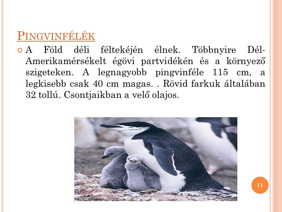 P INGVINFÉLÉK A Föld déli féltekéjén élnek. Többnyire Dél- Amerikamérsékelt égövi partvidékén és a környező szigeteken. A legnagyobb pingvinféle 115 c