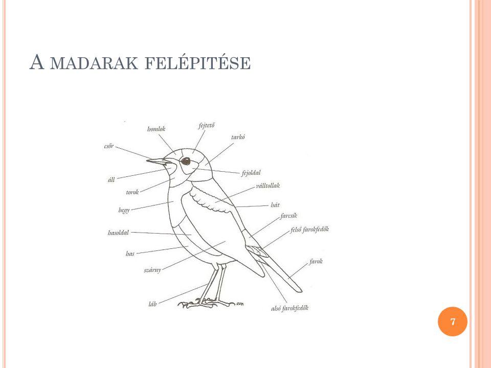 S ZAPORODÁS A madarak belső megtermékenyítésűek.