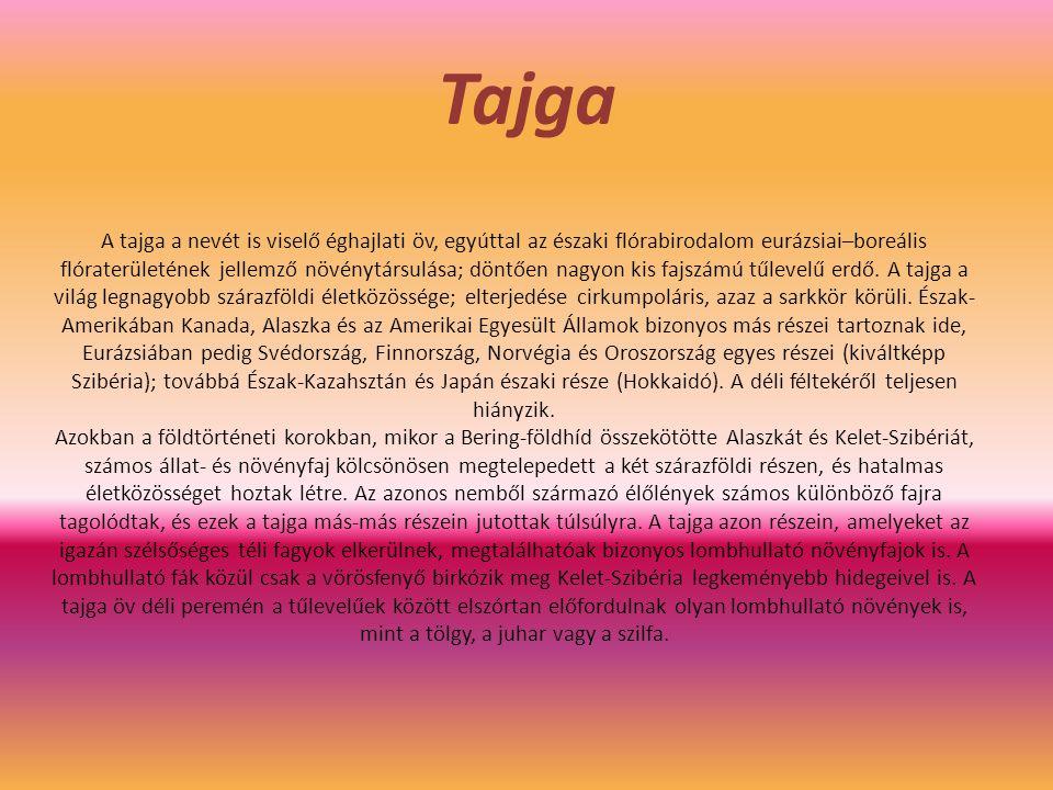 Tajga A tajga a nevét is viselő éghajlati öv, egyúttal az északi flórabirodalom eurázsiai–boreális flóraterületének jellemző növénytársulása; döntően nagyon kis fajszámú tűlevelű erdő.