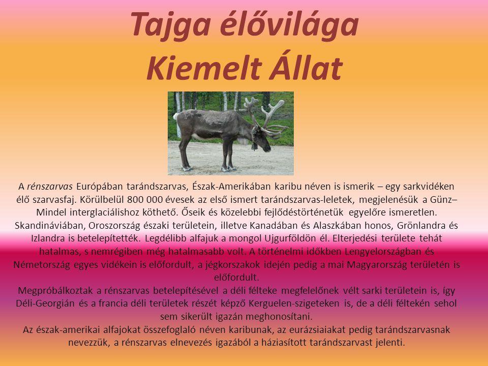 Tajga élővilága Kiemelt Állat A rénszarvas Európában tarándszarvas, Észak-Amerikában karibu néven is ismerik – egy sarkvidéken élő szarvasfaj. Körülbe