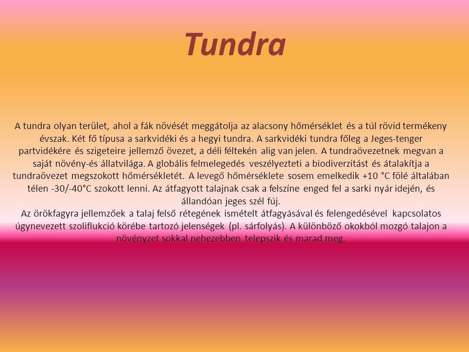 Tundra A tundra olyan terület, ahol a fák növését meggátolja az alacsony hőmérséklet és a túl rövid termékeny évszak. Két fő típusa a sarkvidéki és a