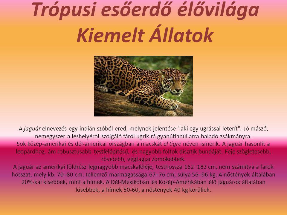 Trópusi esőerdő élővilága Kiemelt Állatok A jaguár elnevezés egy indián szóból ered, melynek jelentése aki egy ugrással leterít .