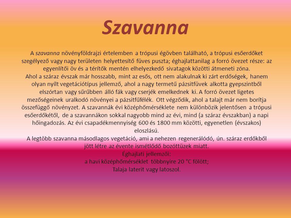 Szavanna A szavanna növényföldrajzi értelemben a trópusi égövben található, a trópusi esőerdőket szegélyező vagy nagy területen helyettesítő füves pus