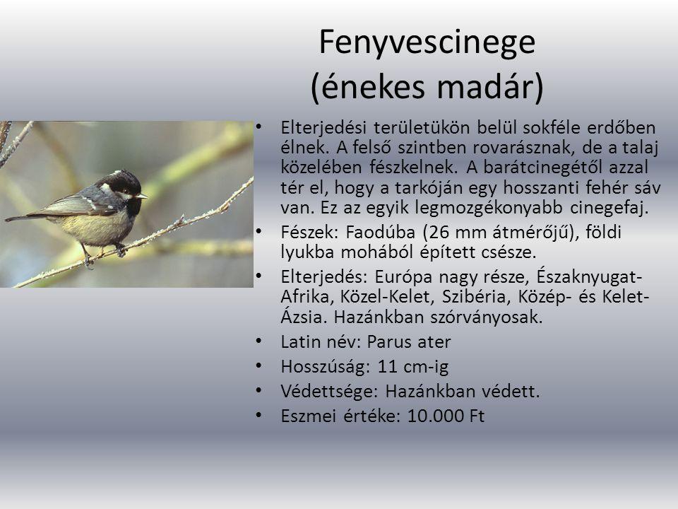 Fenyvescinege (énekes madár) Elterjedési területükön belül sokféle erdőben élnek. A felső szintben rovarásznak, de a talaj közelében fészkelnek. A bar