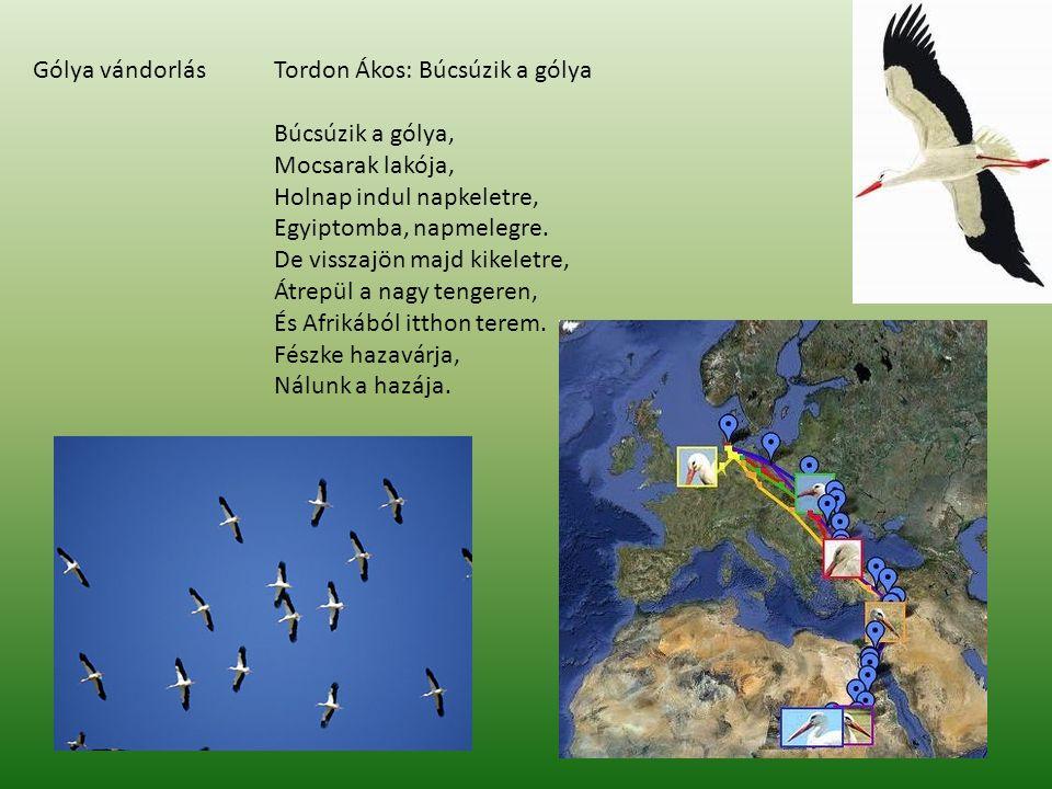 Gólya vándorlásTordon Ákos: Búcsúzik a gólya Búcsúzik a gólya, Mocsarak lakója, Holnap indul napkeletre, Egyiptomba, napmelegre. De visszajön majd kik