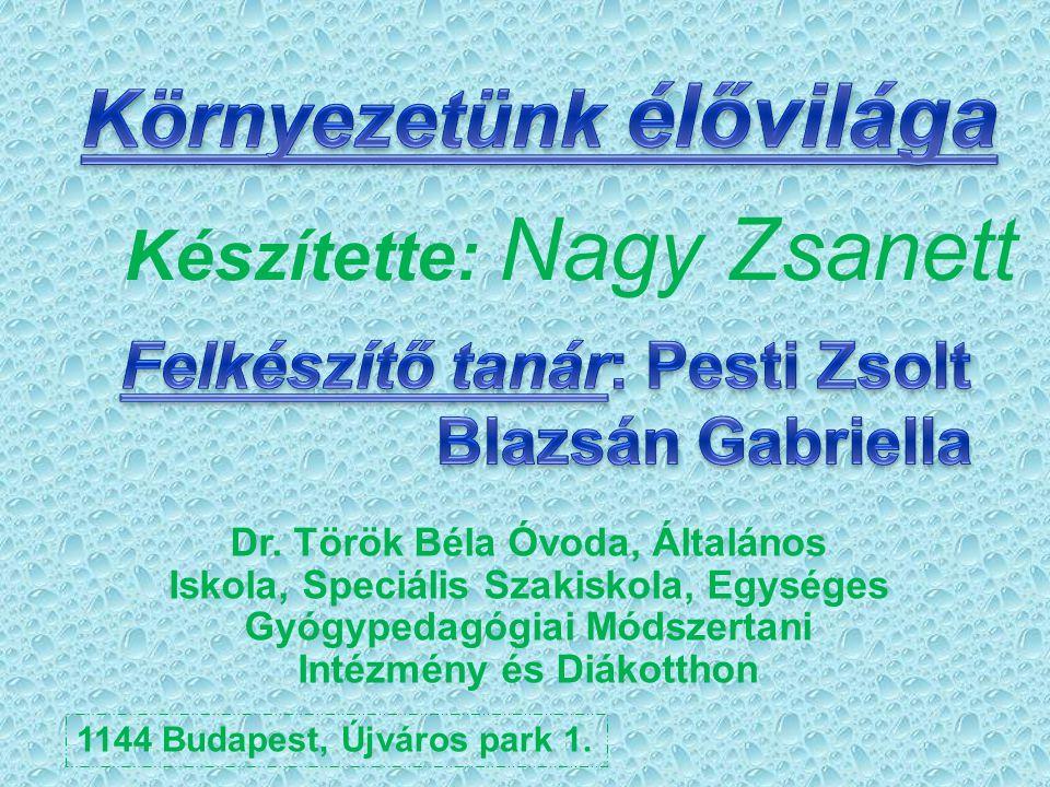 Forrás http://www.zoldmuzeum.hu/buda pest-vedett-es-kulonleges-allatai- novenyeihttp://www.zoldmuzeum.hu/buda pest-vedett-es-kulonleges-allatai- novenyei