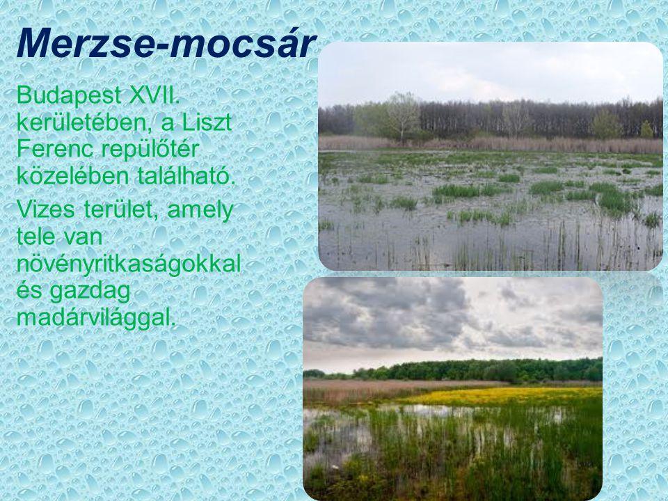 Merzse-mocsár élővilága Bölömbika Gázlómadár. Régi magyar népi neve:  Vizi bika és  Nádi bika