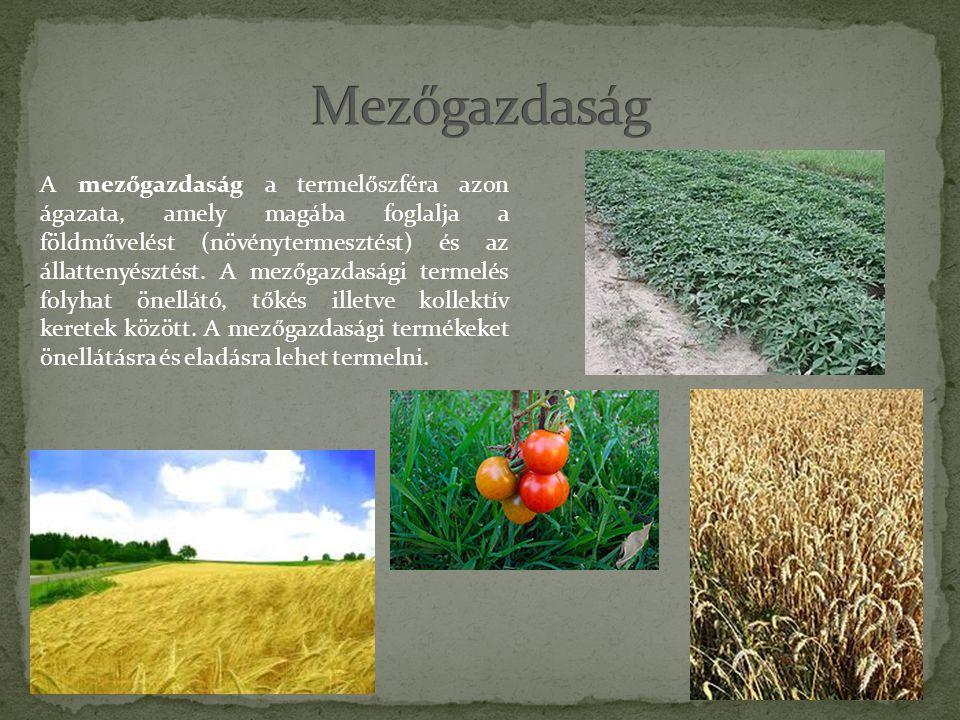 A mezőgazdaság a termelőszféra azon ágazata, amely magába foglalja a földművelést (növénytermesztést) és az állattenyésztést.