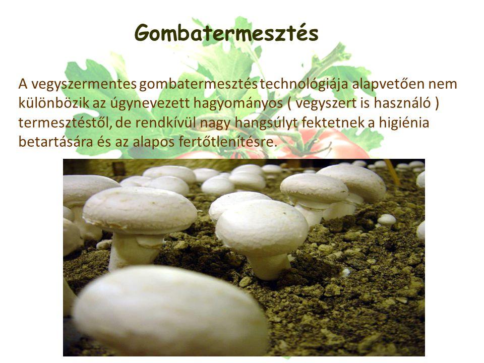 Gombatermesztés A vegyszermentes gombatermesztés technológiája alapvetően nem különbözik az úgynevezett hagyományos ( vegyszert is használó ) termesztéstől, de rendkívül nagy hangsúlyt fektetnek a higiénia betartására és az alapos fertőtlenítésre.