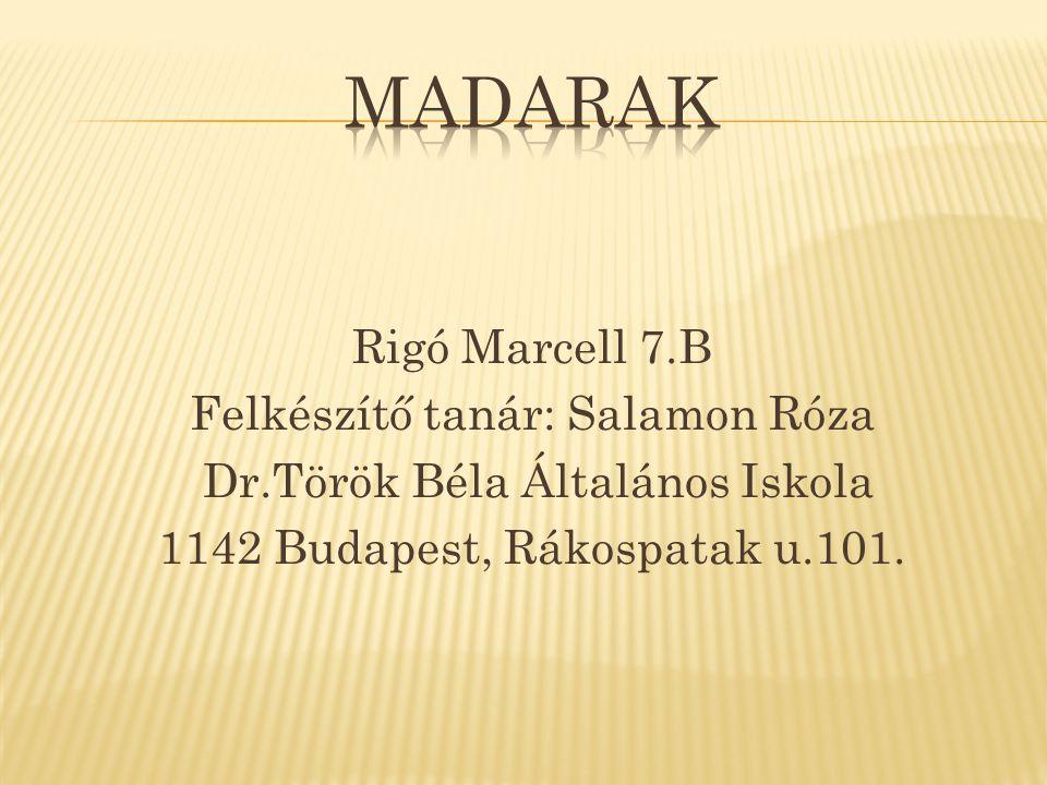 Rigó Marcell 7.B Felkészítő tanár: Salamon Róza Dr.Török Béla Általános Iskola 1142 Budapest, Rákospatak u.101.